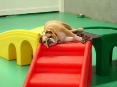 【いいね!】子犬が滑り台に夢中!