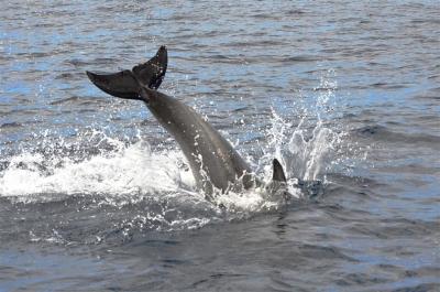 【笑える!】イルカに怒られた!