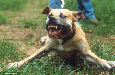 【苦笑】4匹の野犬に襲われる男・・・
