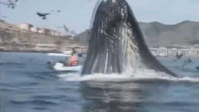 【衝撃!】これは美女がヤバい・・・クジラに食われる!