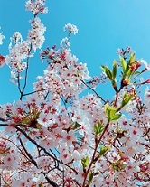 桜2018 アップ