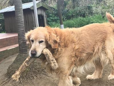 三宅の犬_convert_20180502150242