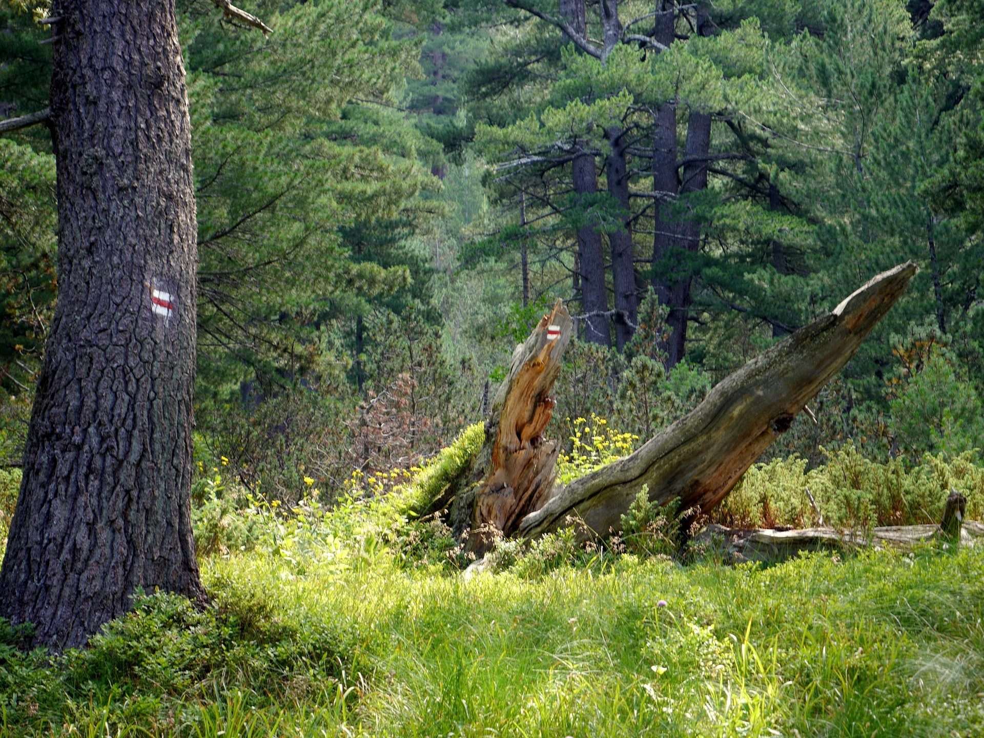 forest-1713237_1920.jpg