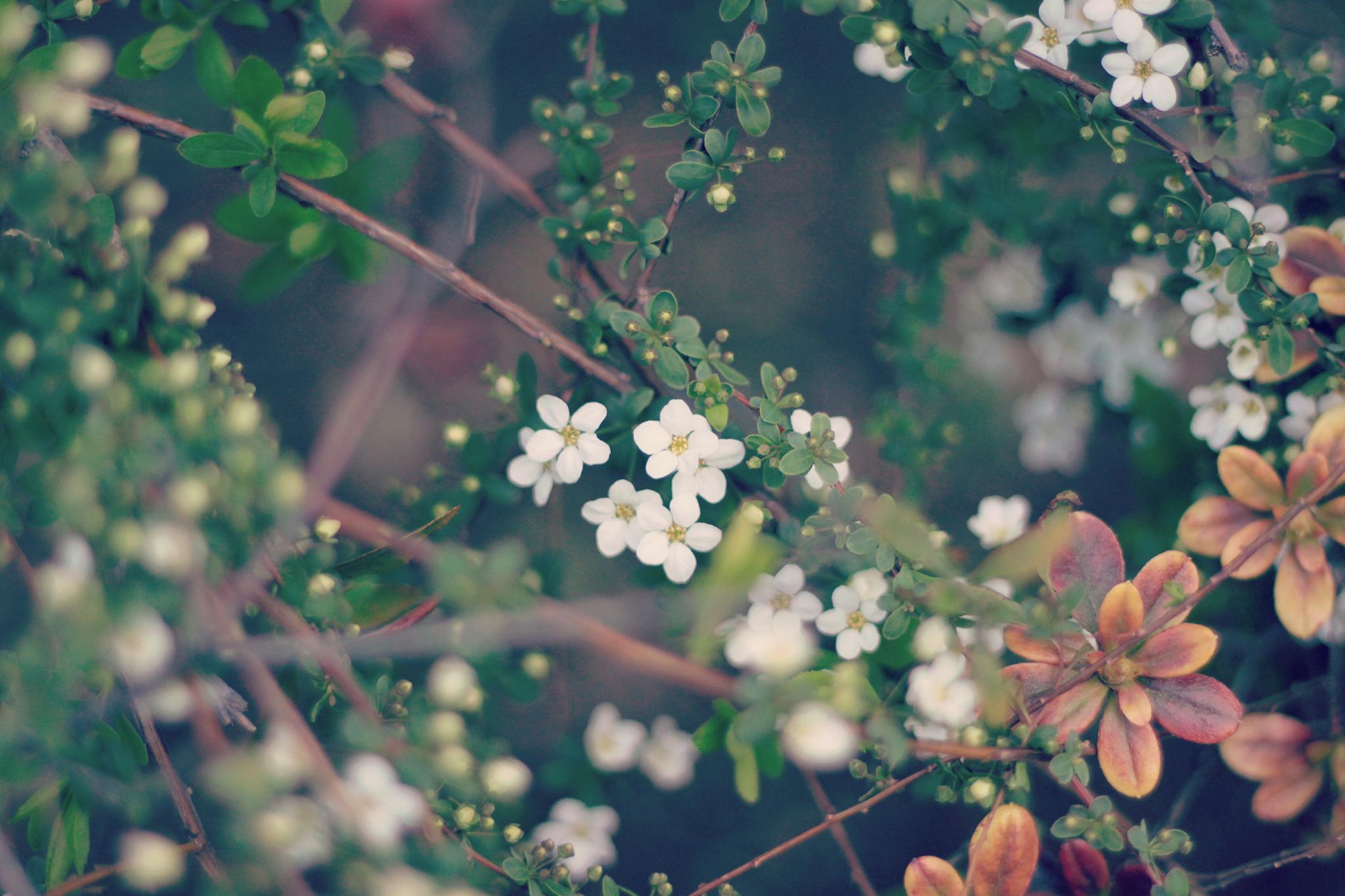 spring_flower.jpg