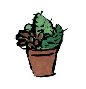 サボテンの寄せ植え