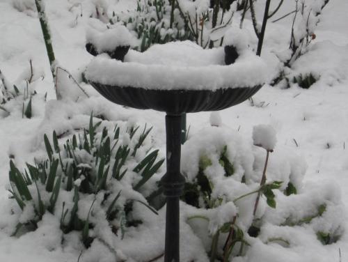 雪降る庭 4月4日
