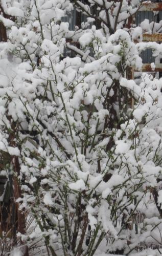 春の雪 4月4日