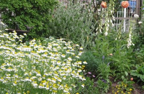 平成30年 6月の庭