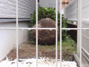 シンボルツリー キンモクセイ :エクステリア横浜(神奈川県・東京都の外構工事専門店)