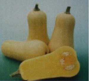 バターナッツ2
