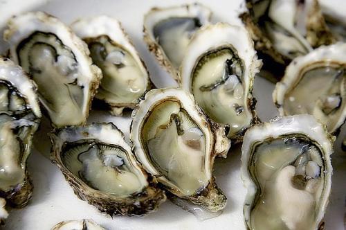 oyster-1522835_640_convert_20180413001828.jpg