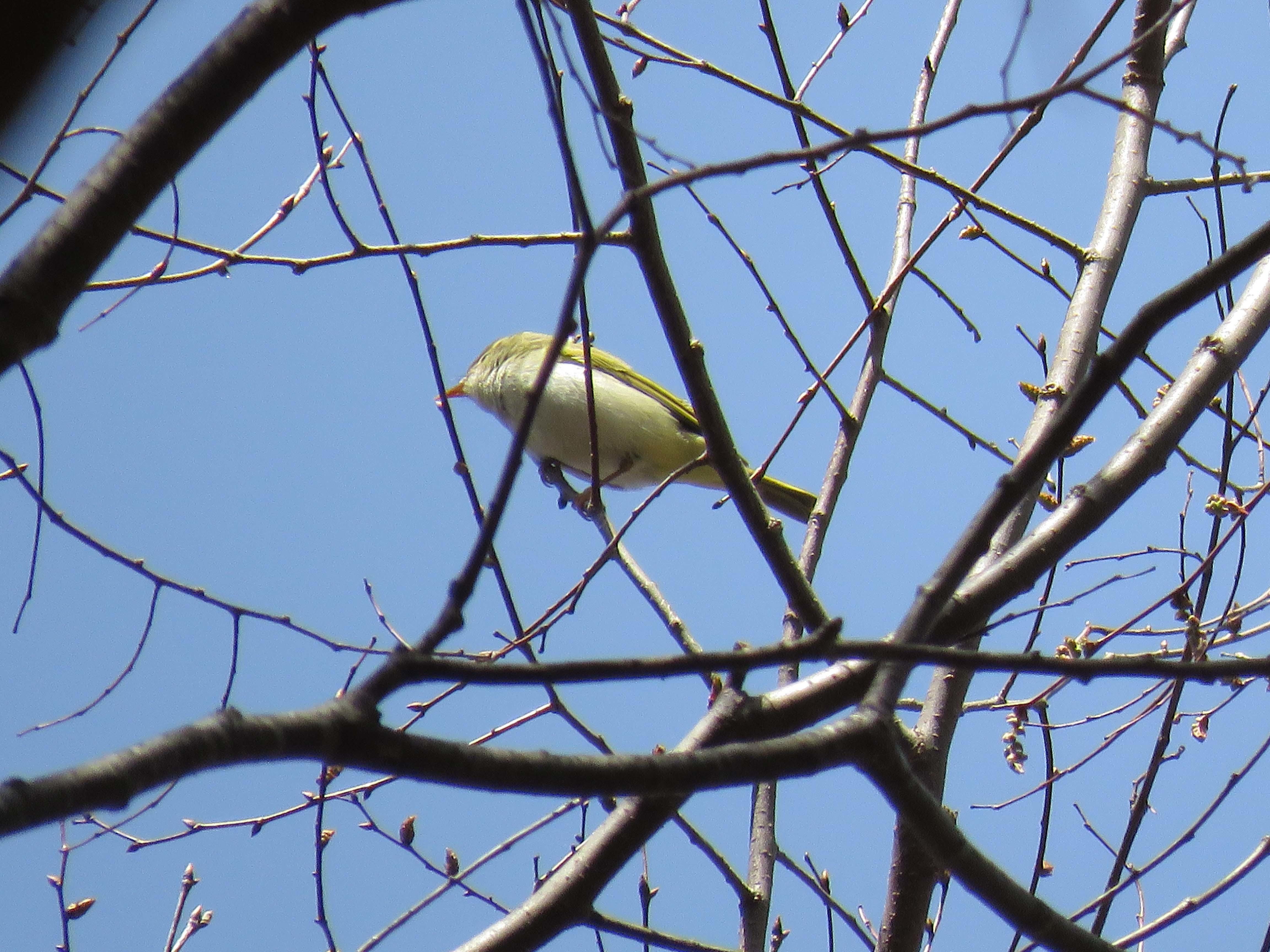 小鳥B_180416