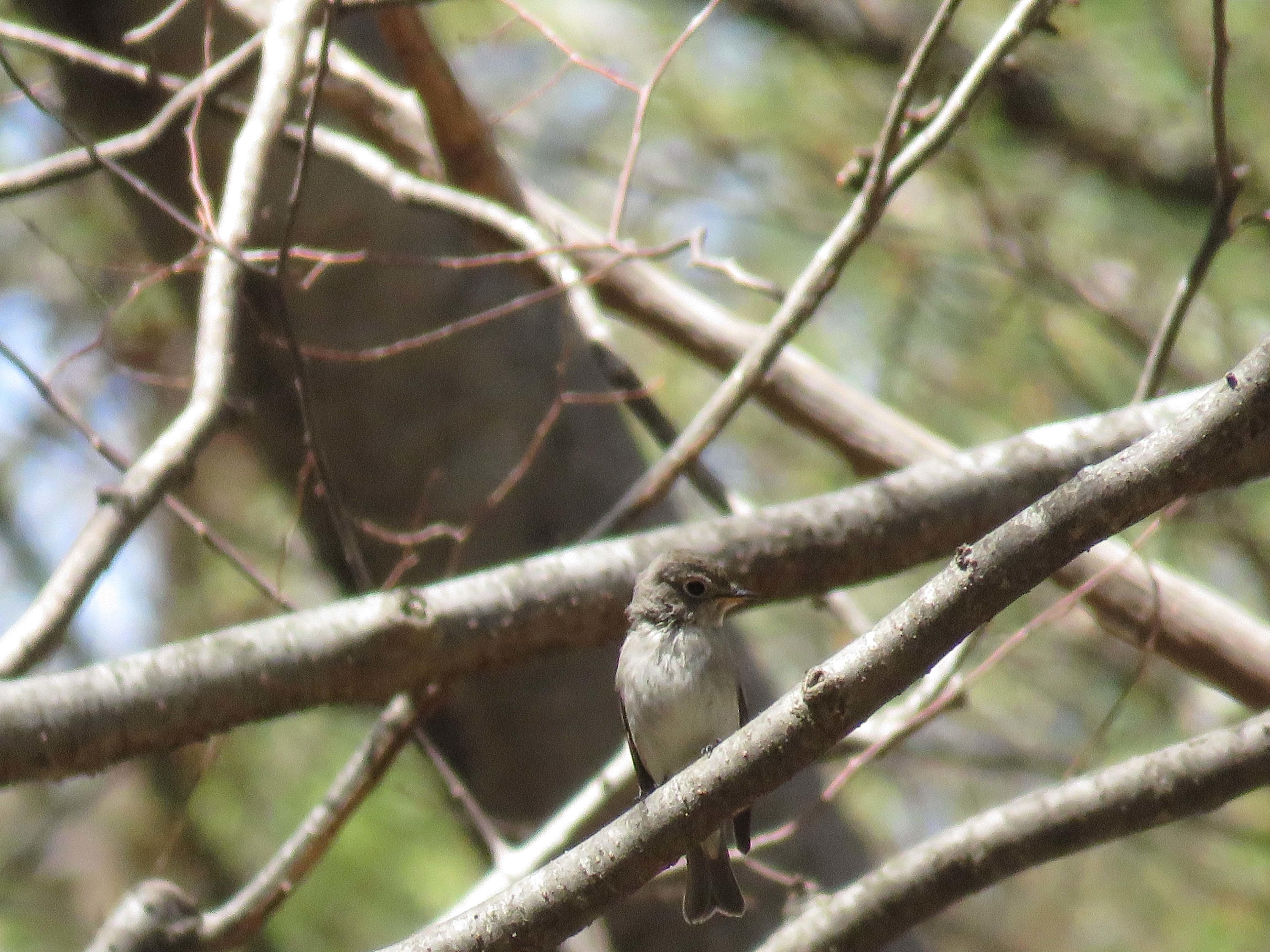 小鳥C_180416