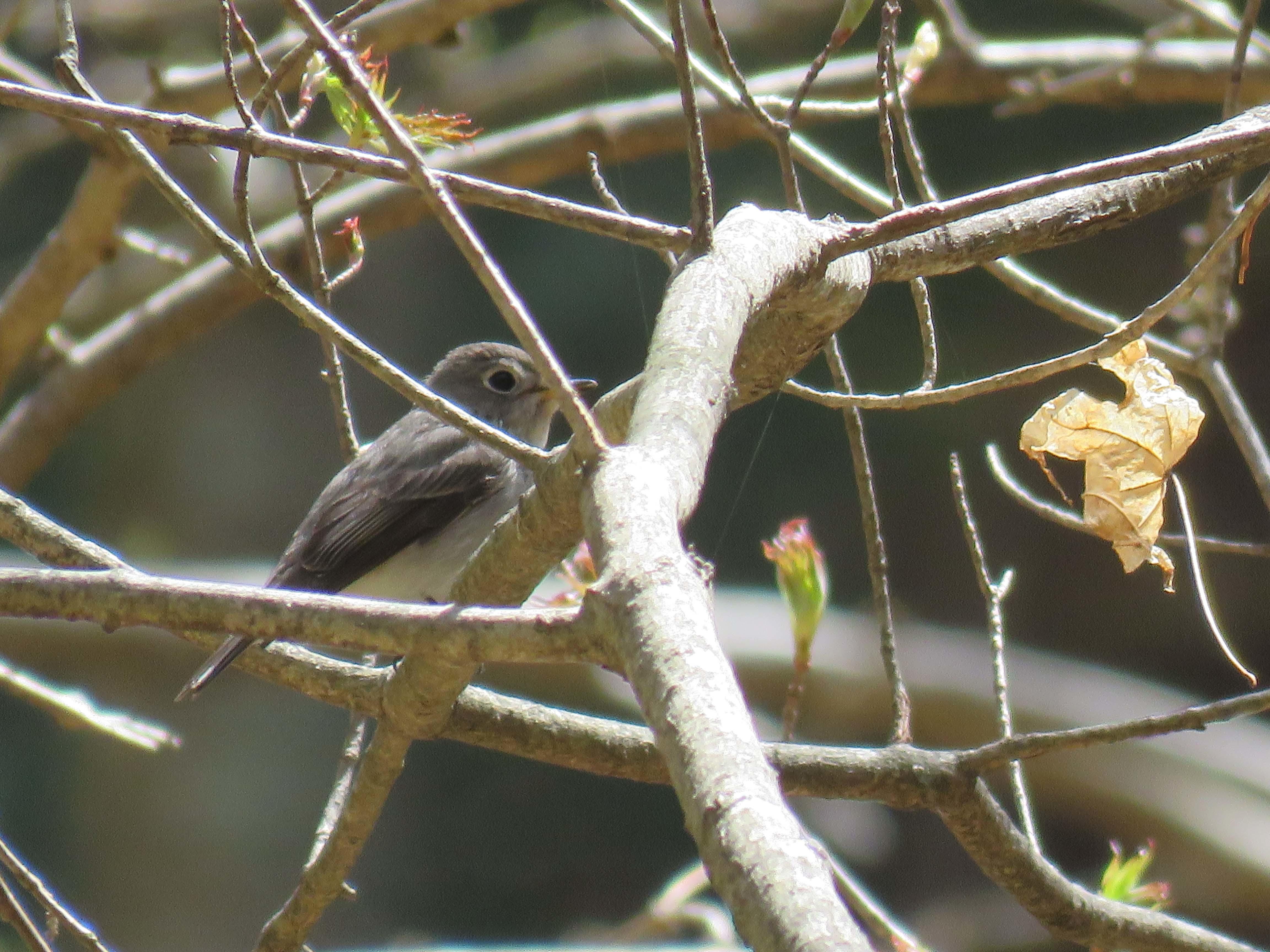 小鳥D_180416