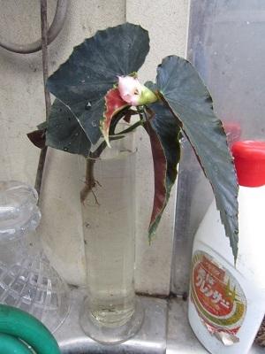 瓶の中で咲く-1