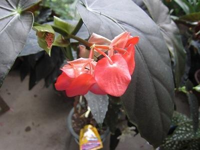 大きな葉と花ー1
