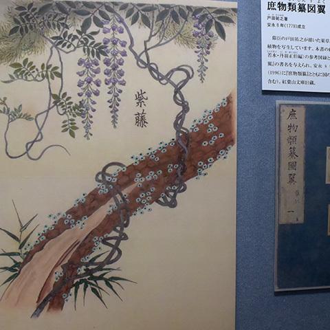 今でいうボタニカルアートが江戸時代に描かれていた