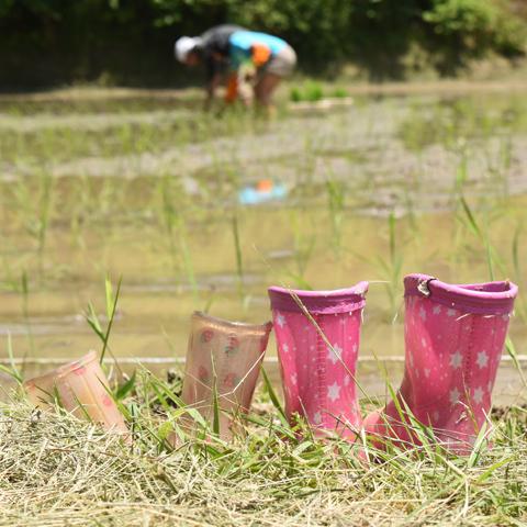 子供時分には田植えを終えた田んぼで随分ドジョウを捕まえたものだ