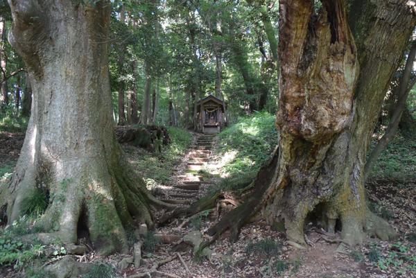 ケヤキとスダジイの大木の間にのぞく鬮神社の祠