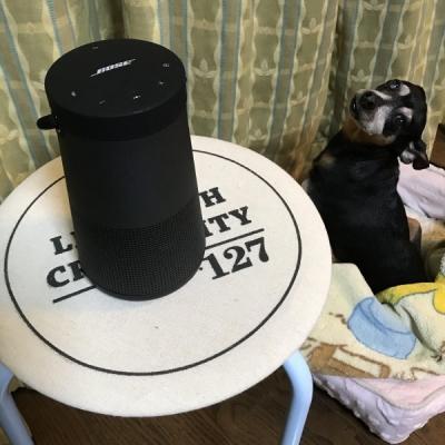 スピーカーと犬2
