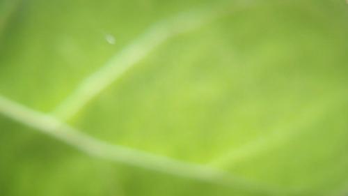 Produce_4-037.jpg