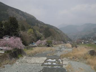 枝垂れ桜並木尺里峠に向かう橋の上から180403