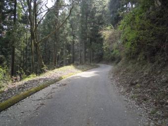 尺里峠直前の林道180403