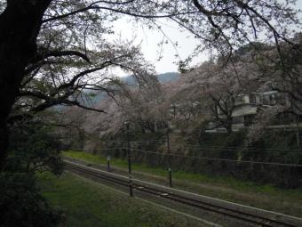 山北線路と桜180403