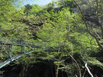 橋を渡る180421