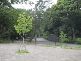 公園内の見晴らしの良い処180430