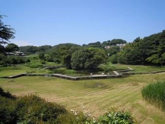 厳島湿生公園180625