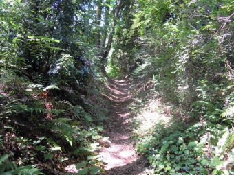 峠の所に向かって180625