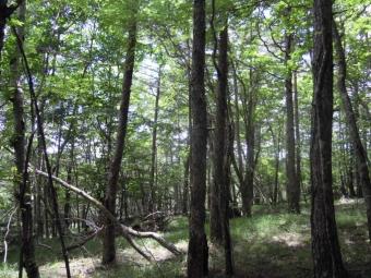 樹林帯を進む180713