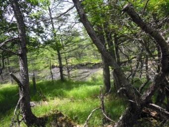 稜線の手前の林の中180713