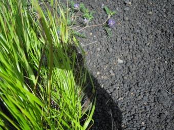紫色の可愛い花180713