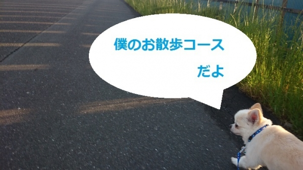 DSC_2128(2).jpg