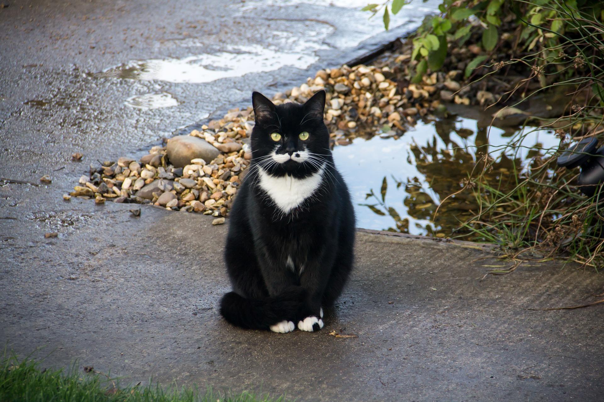 cat-2758528_1920.jpg