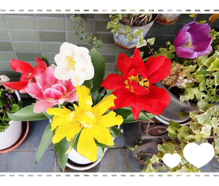 18-04-04-11-11-22-061_deco.jpg