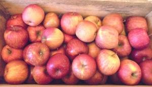 りんご20kg木箱入り