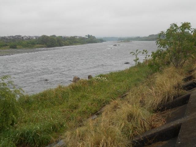 DSCN43550508大渡橋左岸上流1.jpg