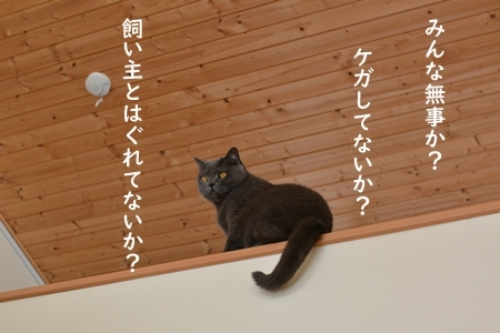 DSC_6486.jpg