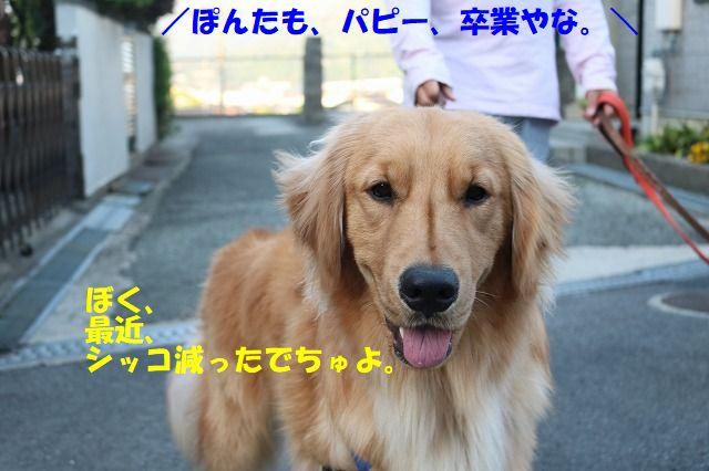 IMG_0648_2018042200043811d.jpg