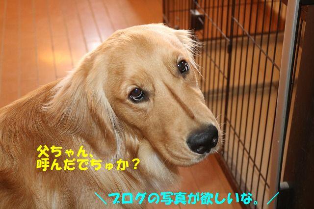 IMG_0845_20180503200620766.jpg