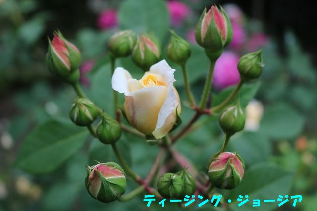 IMG_0938.jpg