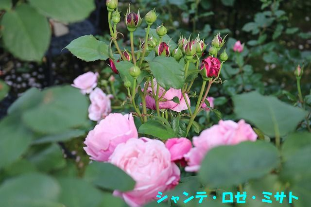 IMG_1191.jpg