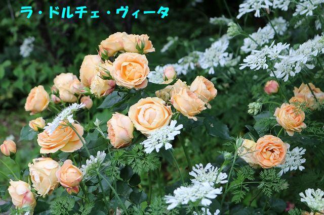 IMG_1208_20180517002155556.jpg