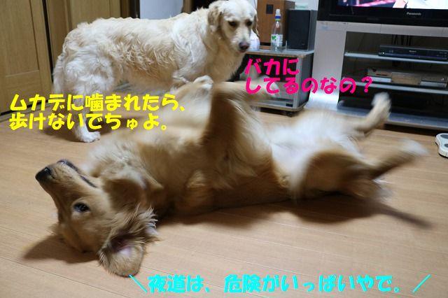 IMG_1654_20180615034628fef.jpg