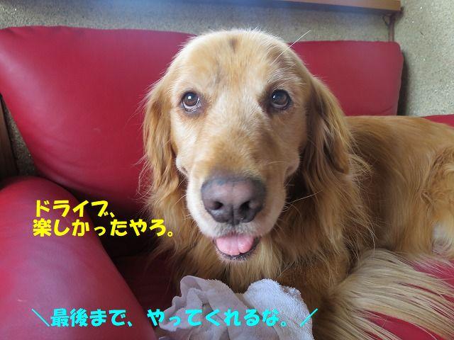 IMG_3412.jpg