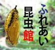 2018_ふれあい昆虫館_logo