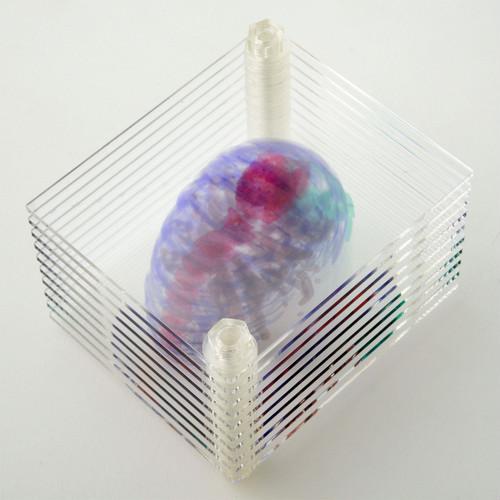 2018_3D透明標本_09